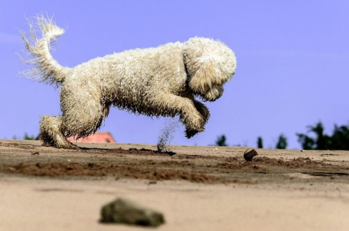 What Is a High Bounce Rate and Is It Good or Bad?